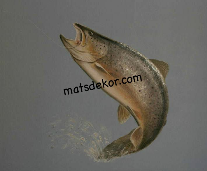 Salmon on silver